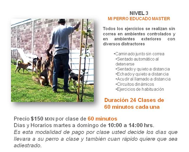 entrenamiento canino en México