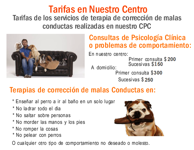 Corrección de conductas caninas