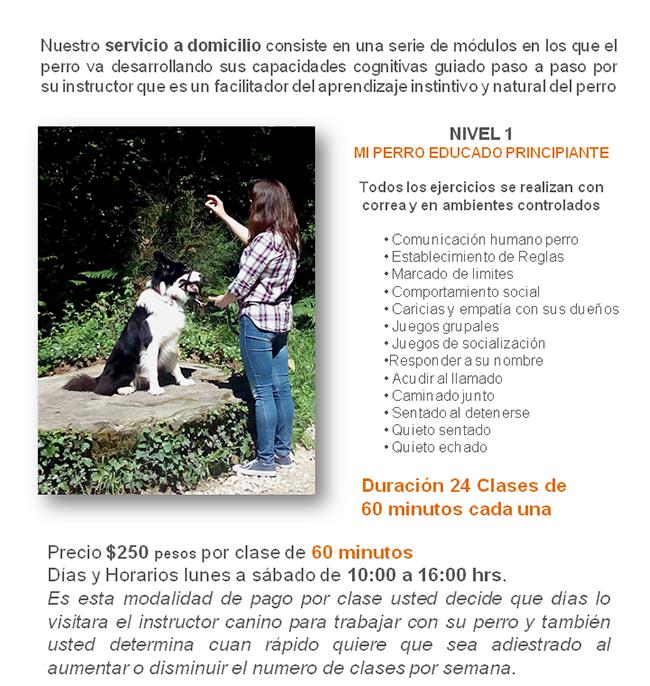 adiestramiento canino a domicilio en México