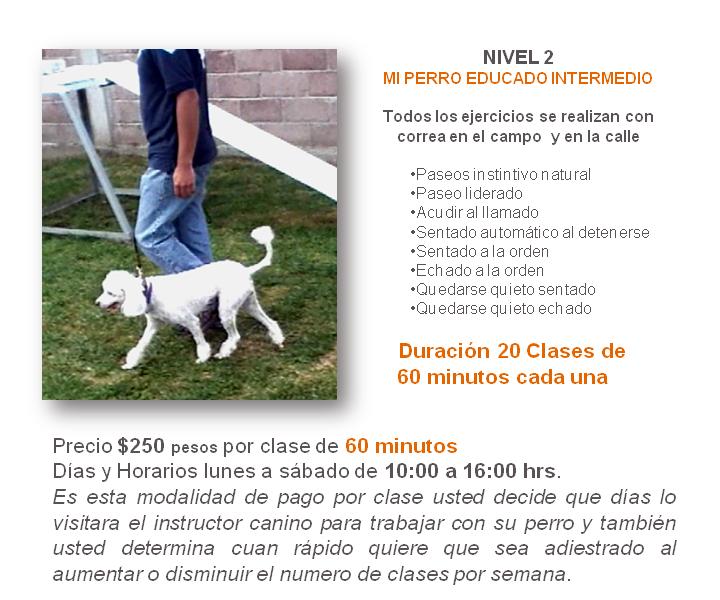 adiestramiento de perros a domicilio en México