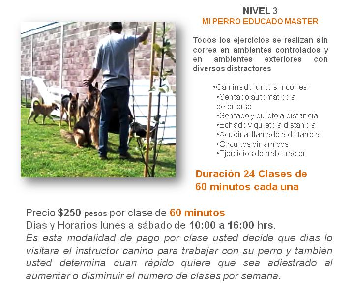entrenamiento canino a domicilio en México