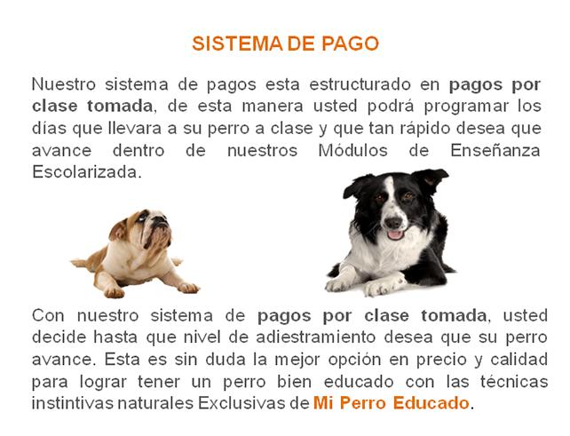 entrenamiento-de-perros-escolar