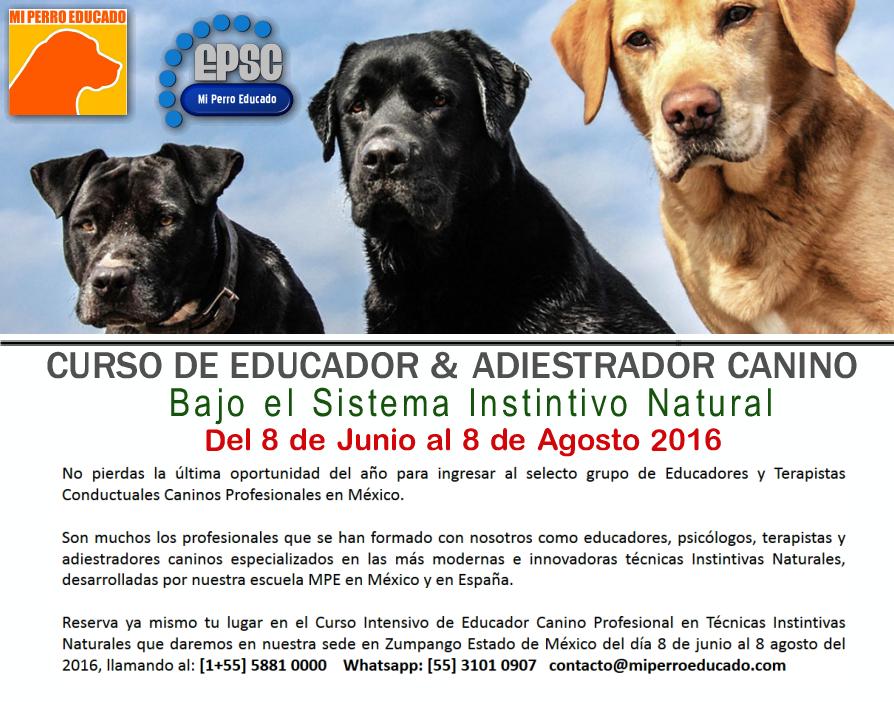 Curso para Adiestradores caninos